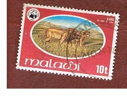 MALAWI - SG 568  -      1978 WWF: WILDLIFE (LION) -  USED° - Malawi (1964-...)