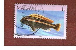 MALAWI - SG 688 - 1984   FISHES: GOLDEN MBUNA    -  USED° - Malawi (1964-...)