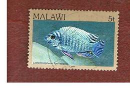 MALAWI - SG 690 - 1984   FISHES: BLUE MBUNA   -  USED° - Malawi (1964-...)