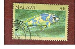 MALAWI - SG 695 - 1984   FISHES: ZEBRA MBUNA   -  USED° - Malawi (1964-...)