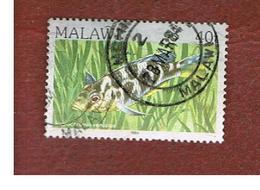 MALAWI - SG 696 - 1984   FISHES: BLUE STREAK HAP   -  USED° - Malawi (1964-...)