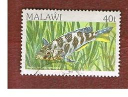 MALAWI - MI 418II - 1986   FISHES: VENUSTUS  CICHLID (DATED 1986)   -  USED° - Malawi (1964-...)