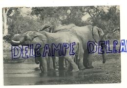 Elephants. Kruger National Park 1966 - Éléphants