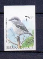 2775 Klapekster Buzin  Ongetand 1998 - Belgique