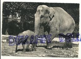 Elephants. Zurich. 1954 - Éléphants