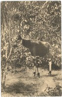 "CONGO KABINDA 1923 - Entiers Vers Mad. DE WEVER, Jette-St-Pierre (cf. VUE ""OKAPI"") - R - Enteros Postales"