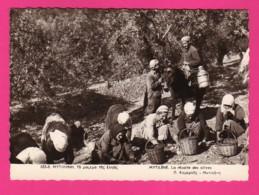 CPSM (Ref: Z2169) (GRÈCE) MYTILÈNE La Récolte Des Olives - Grecia