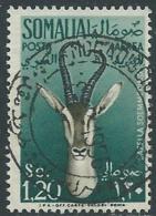 1955 SOMALIA AFIS POSTA AEREA USATO ANIMALI 1,20 S - UR31 - Somalia (AFIS)