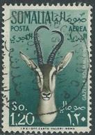 1955 SOMALIA AFIS POSTA AEREA USATO ANIMALI 1,20 S - UR31-2 - Somalia (AFIS)