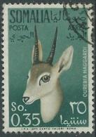 1955 SOMALIA AFIS POSTA AEREA USATO ANIMALI 35 CENT - UR31 - Somalia (AFIS)
