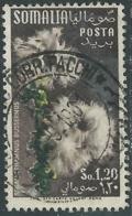 1955 SOMALIA AFIS USATO FIORI 1,20 S - UR31-2 - Somalia (AFIS)