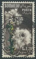 1955 SOMALIA AFIS USATO FIORI 1,20 S - UR31-3 - Somalia (AFIS)