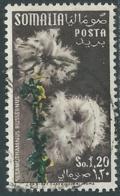 1955 SOMALIA AFIS USATO FIORI 1,20 S - UR31-4 - Somalia (AFIS)