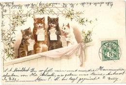 Katzen - Gesangsquartett              1899 - Chats