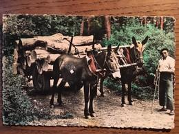 CPSM, Biscarosse Plage, 40, Landes Pittoresques, Attelage De Mules, éd Van Eyk-Rouleau, Forestier, Métiers - Biscarrosse