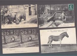Animaux / Zoos / Collection De 26 CP / Paris, Parc Vincennes, Jardin Plantes, Acclimatation.. - Animaux & Faune