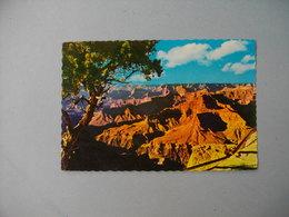 GRAND CANYON NATIONAL PARK  - The Long Shadows  -   Arizona  -  Etats Unis - Grand Canyon