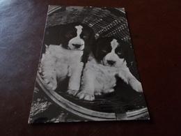 B733  Cani Viaggiata Piega Angolo - Cani