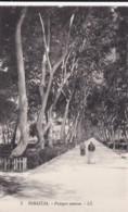 AN41 Ismailia, Poirpre Avenue - LL Postcard - Ismailia