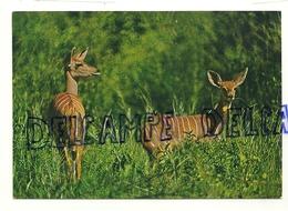 Antilopes Africa Dell'est. Fauna Africana. - Éléphants
