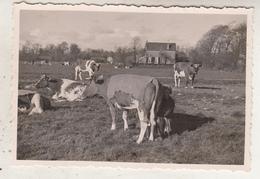 Nederland - Boerderij - Koeien In De Weide - Te Situeren - Foto 6.5 X 9.5 Cm - Plaatsen
