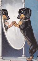 Dackel Teckel Dachshund Chien Mirror Old Dog Cpa. 1909 - Hunde