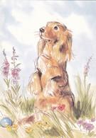 Dackel Teckel Dachshund Chien  Old Dog Postcard - Dogs