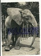 Zoologischer Garten Basel. Bâle. Eléphant - Éléphants