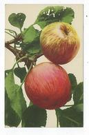 CPA - Fruits - Pommes - Rommel - Fiori, Piante & Alberi