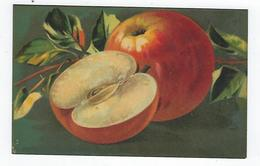 CPA - Fruits - Pommes - T.A.M. - Fiori, Piante & Alberi