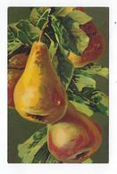 CPA - Fruits - Poires - Artistica Velluto - Fiori, Piante & Alberi