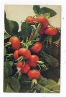 CPA - Fruits - Légumes - Früchte - Rommler & Jonas - Fiori, Piante & Alberi