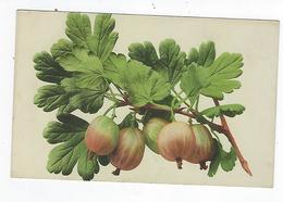 CPA - Fruits - Groseilles à Maquereau - Groseilles - Fiori, Piante & Alberi
