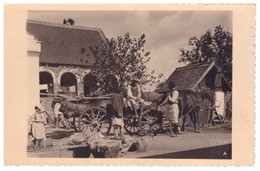 Romania Timisoara Banat Comuna Bazos Port Popular Caruta Cai Foto Arta Timisoara 1938 RARE - Roumanie
