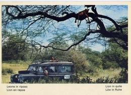 Fauna Africana - Leone In Riposo - 166 - 1 - Formato Grande Non Viaggiata – E 13 - Leoni