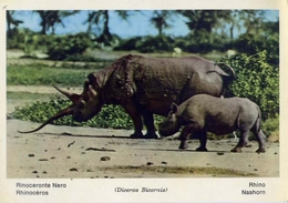 Fauna Africana - Elefante Africano - 166 - 11 - Formato Grande Non Viaggiata – E 13 - Elefanti