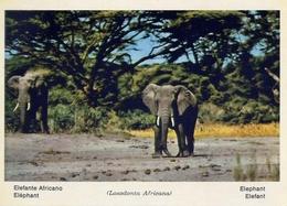 Fauna Africana - Elefante Africano - 166 - 18 - Formato Grande Non Viaggiata – E 13 - Elefanti