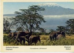 Fauna Africana - Elefante Africano - 166 - 25 - Formato Grande Non Viaggiata – E 13 - Elefanti