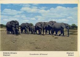 Fauna Africana - Elefante Africano - 166 - 4 - Formato Grande Non Viaggiata – E 13 - Elefanti