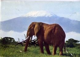 Elephant Under Kilimanjaro - Formato Grande Viaggiata Mancante Di Affrancatura – E 13 - Elefanti