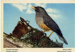 Fauna Africana - Uccello Africano - 166 - 8 - Formato Grande Non Viaggiata – E 13 - Uccelli