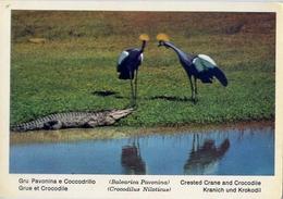 Fauna Africana - Gru Pavonina E Coccodrillo - 166 - 15 - Formato Grande Non Viaggiata – E 13 - Uccelli
