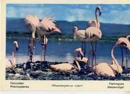 Fauna Africana - Fenicotteri - 166 - 3 - Formato Grande Non Viaggiata – E 13 - Uccelli