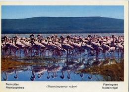 Fauna Africana - Fenicotteri - 166 - 14 - Formato Grande Non Viaggiata – E 13 - Uccelli