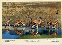 Fauna Africana - Antilope Saltante - 166 - 17 - Formato Grande Non Viaggiata – E 13 - Non Classificati