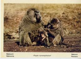 Fauna Africana - Babbuini - 166 - 22 - Formato Grande Non Viaggiata – E 13 - Non Classificati