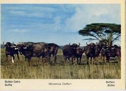 Fauna Africana - Bufalo Cafro - 166 - 10 - Formato Grande Non Viaggiata – E 13 - Non Classificati