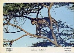 Fauna Africana - Ghepardo - 166 - 5 - Formato Grande Non Viaggiata – E 13 - Non Classificati