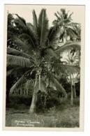 Carte Photo - Moroni - Cocotier (noix De Coco)- Pas Circulé - Comores