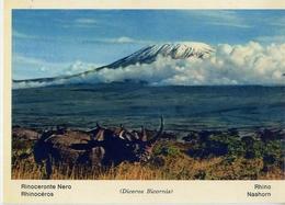 Fauna Africana - Rinoceronte Nero - 166 - 7 - Formato Grande Non Viaggiata – E 13 - Rinoceronte